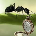 The ant of time