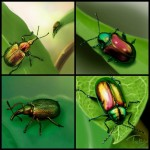 beetle collection 1