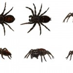 spider_reference_sheet